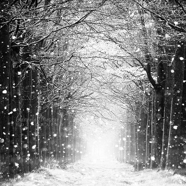 Snowy scene by leelloor