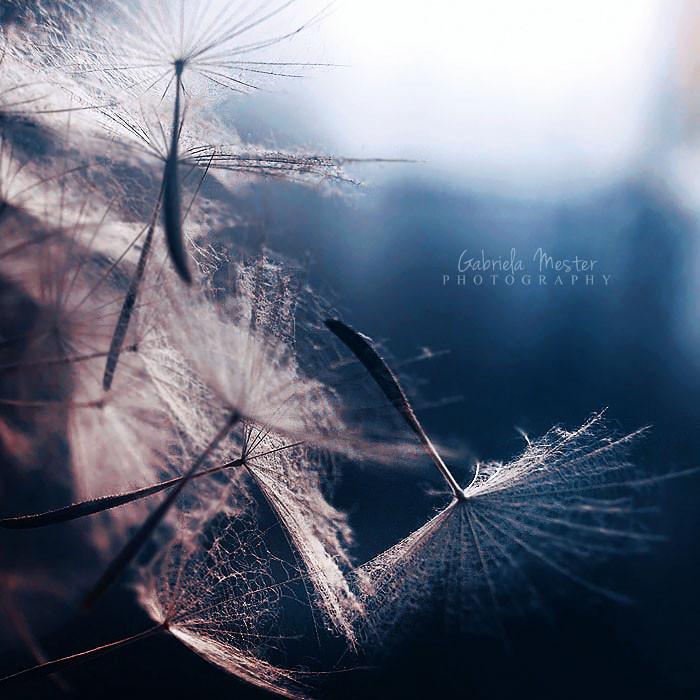 in the twilight by leelloor