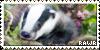 Badger by Hoke-of-Hock