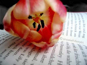 Tell me the Secrets written in your Heart
