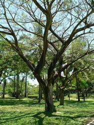 Im a Tree Man