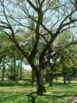 Im a Tree Man by techrack