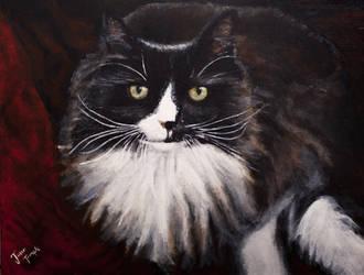 Mungo The Cat