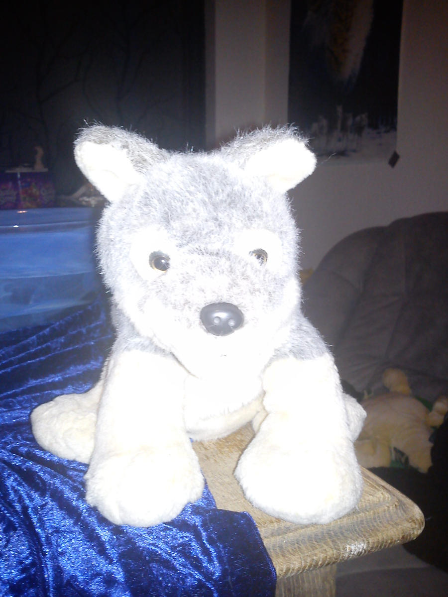 wolf teddy by daylover1313