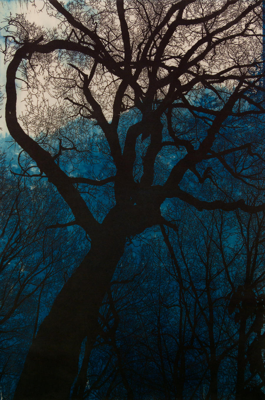 Night Descends with Cyanotype by mouse2cat
