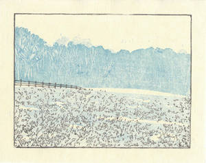 Lucy's Field