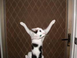 Kitten Crucifixion by gobman