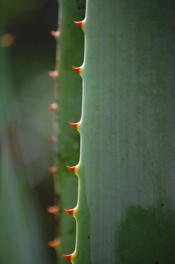 Spikes by orangerhymes