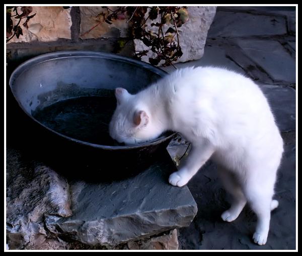 taste of water by petalouda1980