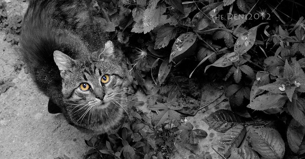 Kit Kat Kitty Cat by DenNiKon