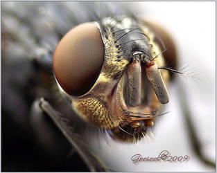 Fly macro by Gooiool
