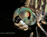 dragonfly_2010