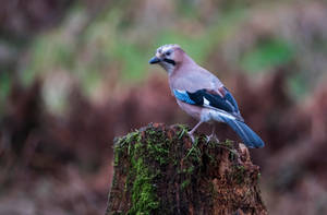 Jay. by gsphoto