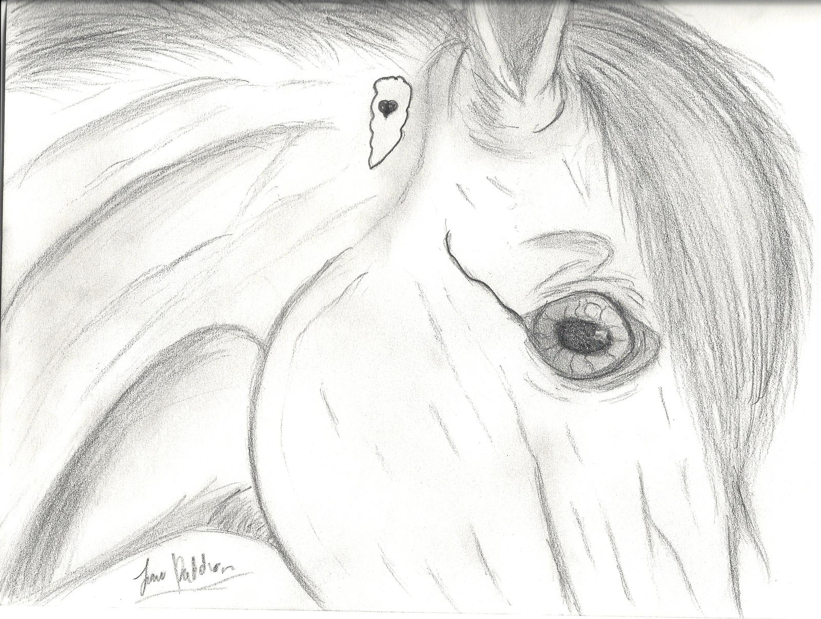 Uncategorized Good Drawings Of Animals horse drawing by w1ndeh on deviantart w1ndeh