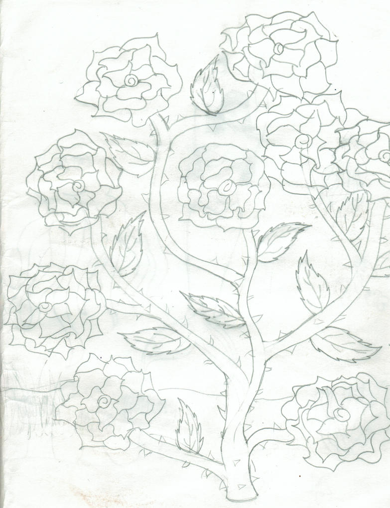 Rose Bushes Drawing How to Draw a Rose Bush