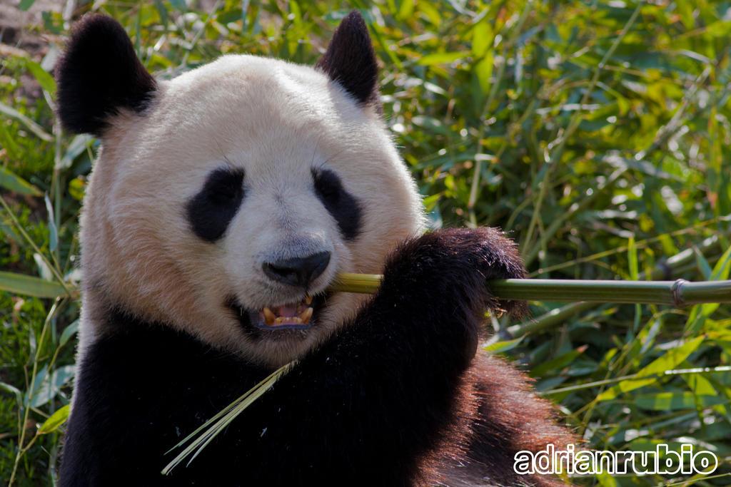 Panda Fast Food Bod Ed F B F Bc  Anda Fast Food Broken Arrow