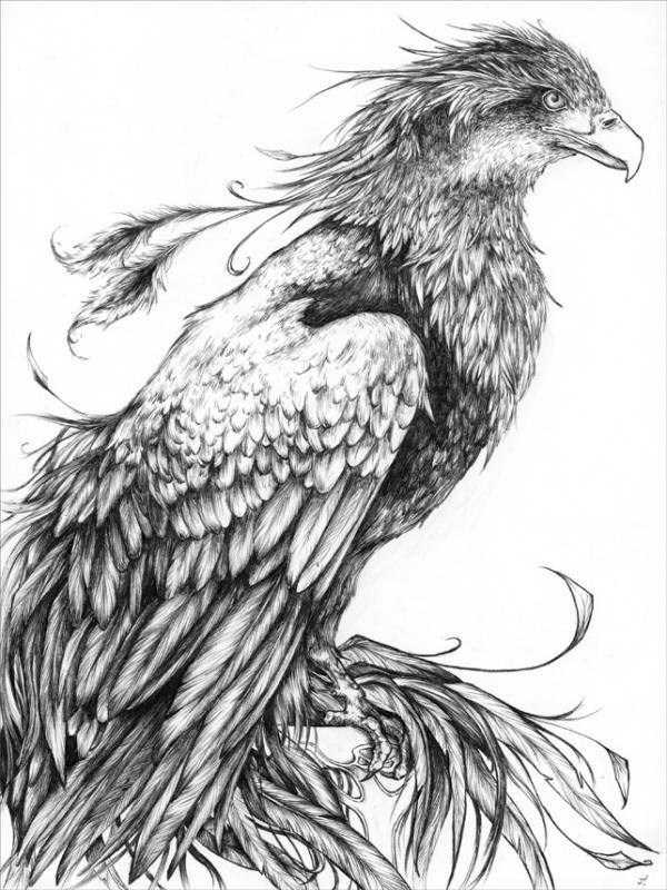 Fawkes The Phoenix By Jiinx Magic On DeviantArt