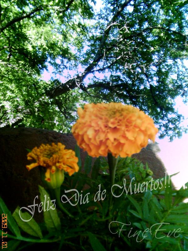 Coronas Con Flores Decoraci Ef Bf Bdn Bodas