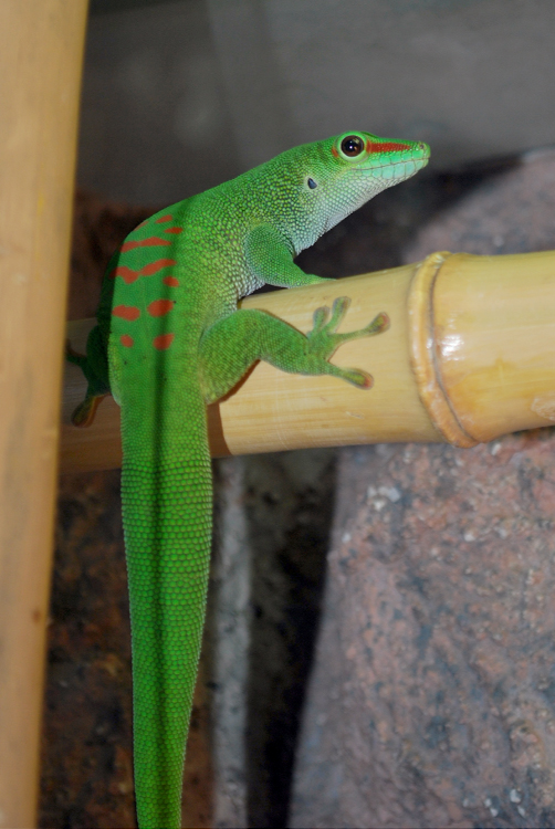 Gecko 7 by Sheilagold