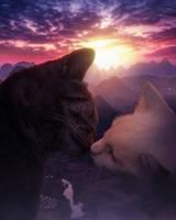 THE CAT ROMANCE