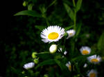 Flower by Abios77