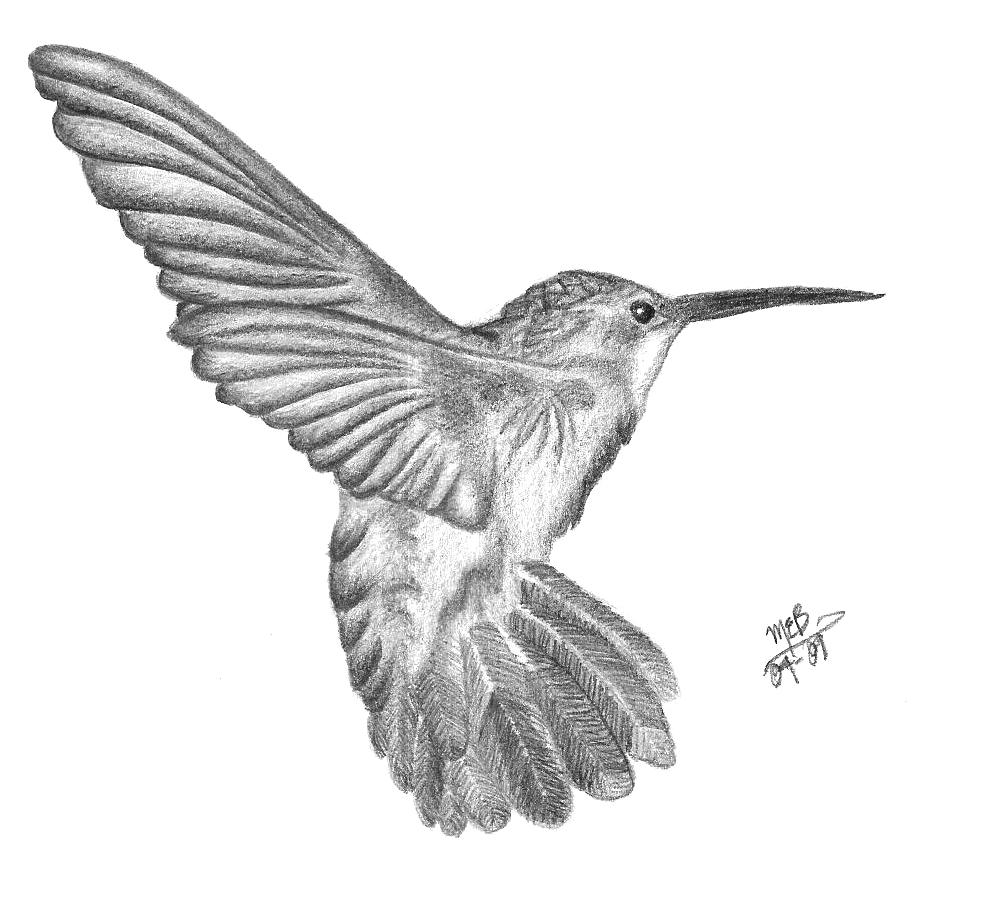 Hummingbird Pencil by ASmallGlimmer on DeviantArt