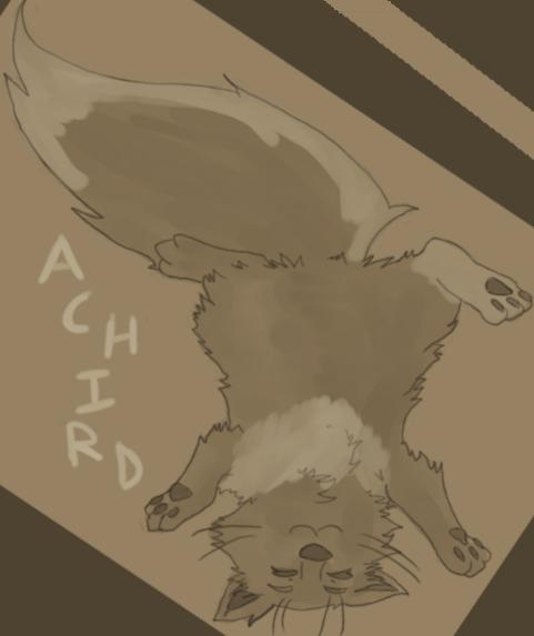 Achird's Profile Picture