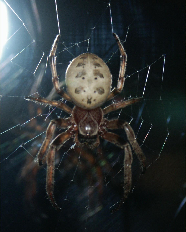 Night Spider by dreamweaver69stock
