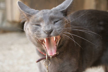 laughing cat by xbr0kendevotion
