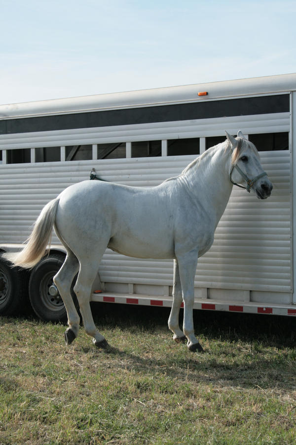 andalusian stock 2