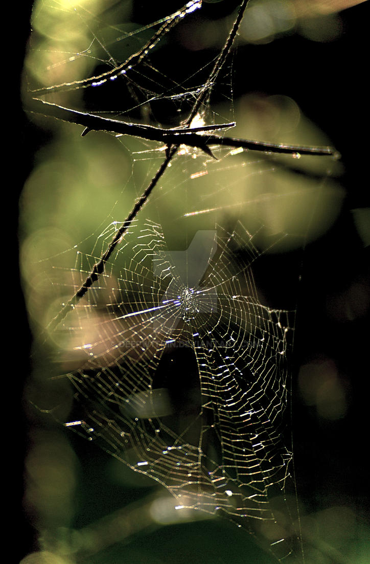 Cobweb by DeepW1thin