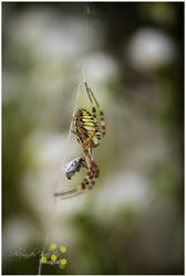 Spider by AlexanderKulla