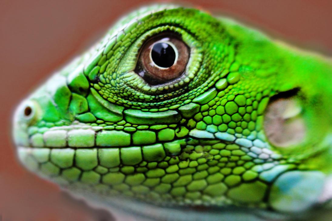 iguana eye painting - photo #28