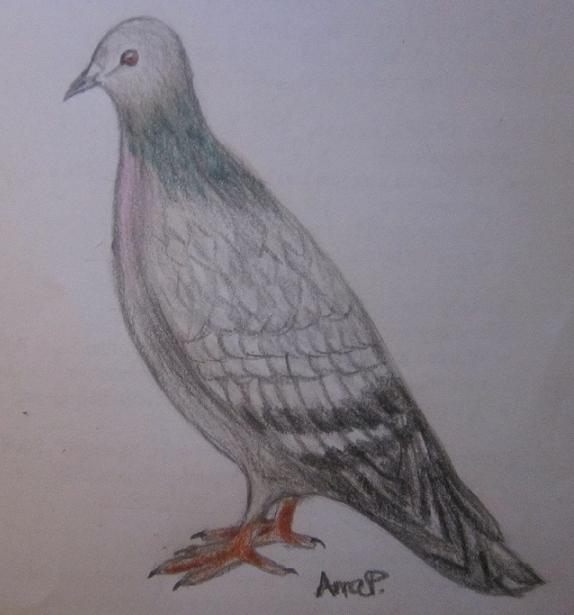 rock_pigeon_by_rowanasabredancer-d4cg88p.png