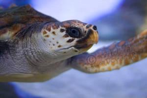Mr. Turtle by scarlet-rain