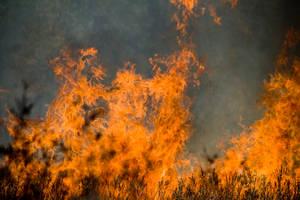 Bushfire 1 by scarlet-rain