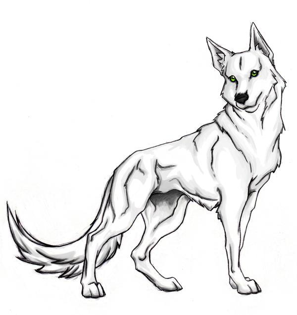 White wolf by xxraithexx