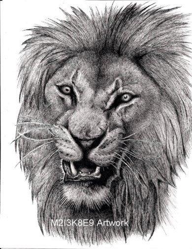 artSnarling-Lion-62171452 Lion Snarl Drawing