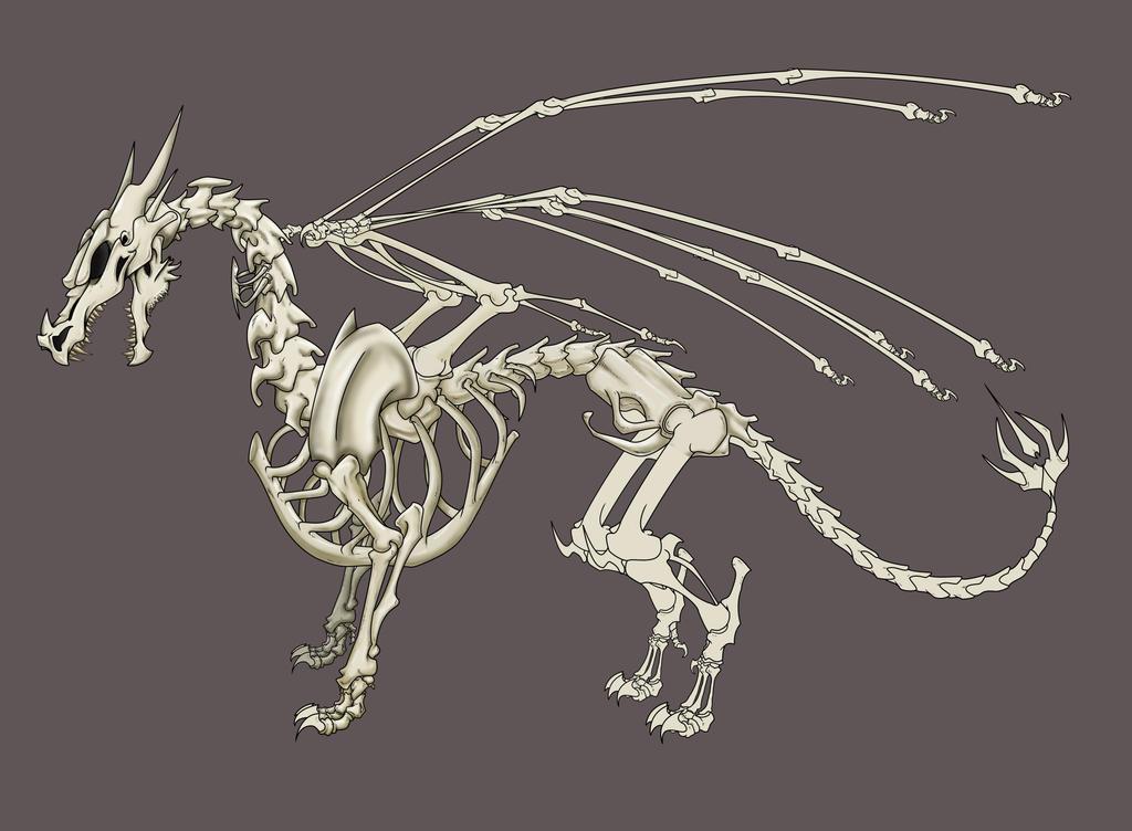 Dragon Skeleton By Snosauges On Deviantart
