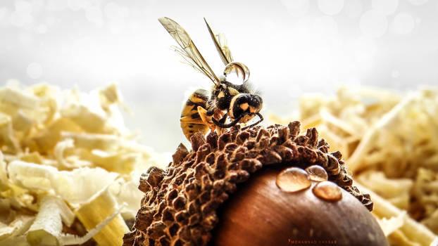 Yellowjacket Wasp