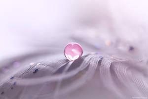 Drop Of Love by MohannadKassab