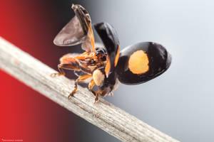 Fresh ( Lady Bug ) by MohannadKassab
