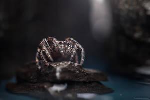 Gossamer Spider by MohannadKassab