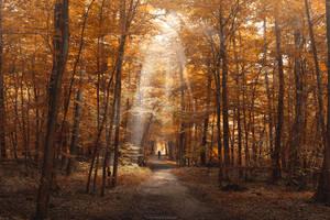 Marvelous Path by MohannadKassab