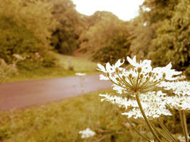 A country lane by LadyMalvoliosander