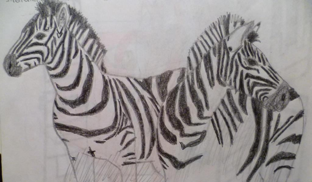 Zebras by Sandro98ch