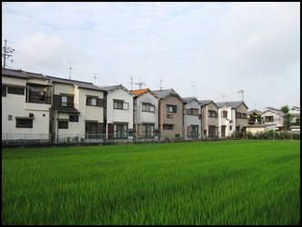 JP06 Rice by omuraisu