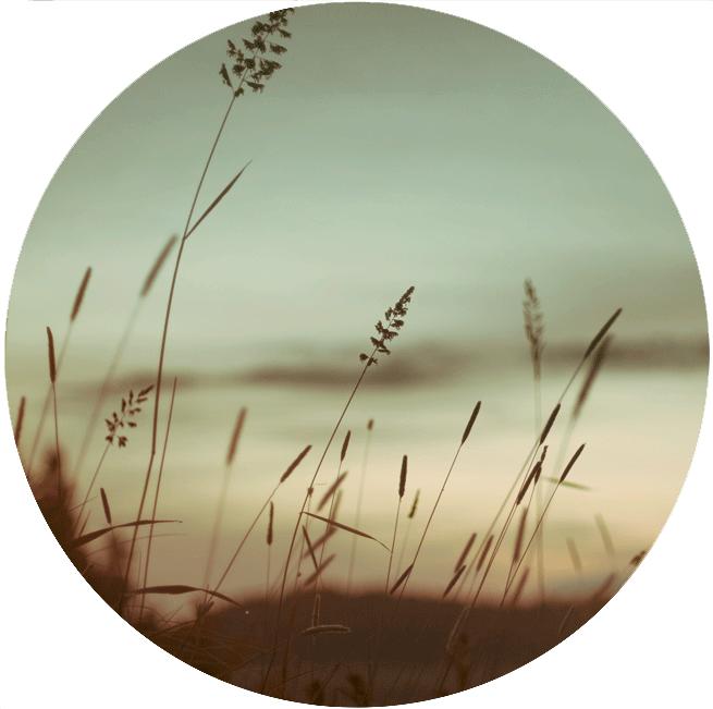 Harvestime series: 1 by Biig