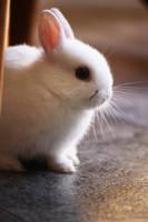 My Bunny - Nismo by fullyhyperlite