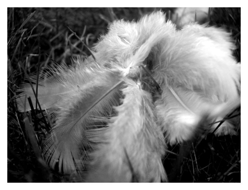 Fallen Angel Feathers by DayDreamsPhotography on deviantART